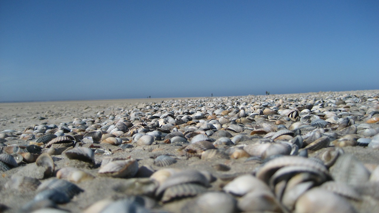 mussels-458992_1280
