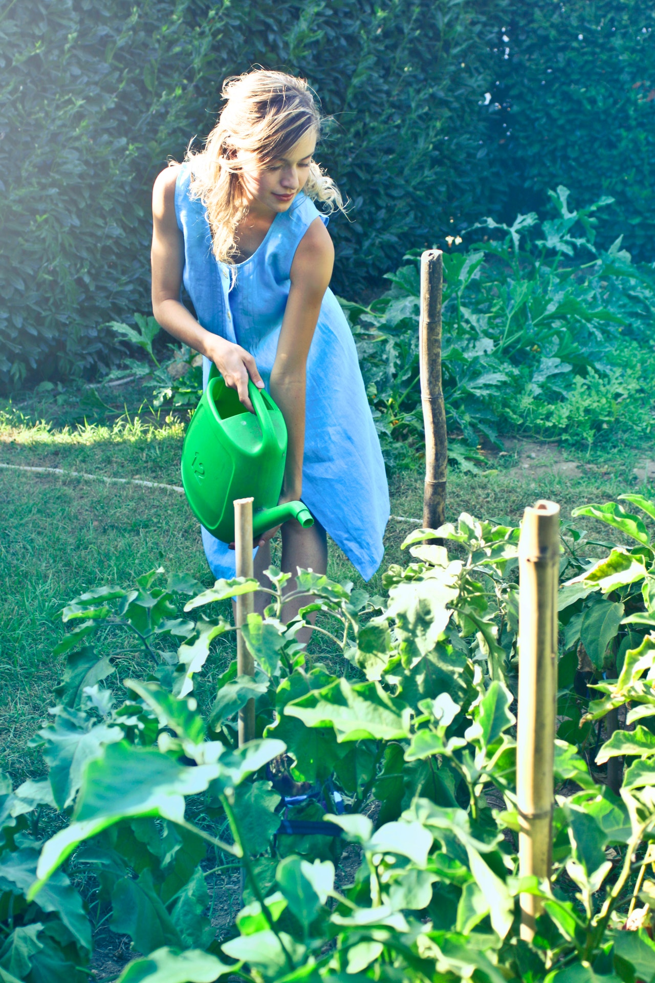 woman-watering-green-plant-1023423
